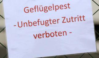 Die ersten Fälle von Vogelgrippe sind 2014 in Europa aufgetaucht - auch in Deutschland. (Foto)