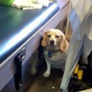 Dieser Hund lässt sein Herrchen nicht allein (Foto)