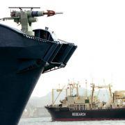 Japan will wieder Wale in der Antarktis jagen (Foto)
