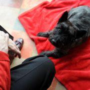 ARD-Radiosender wirbt für Sex mit Hunden (Foto)