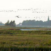 Vogelgrippe-Virus erstmals bei Wildvogel nachgewiesen (Foto)