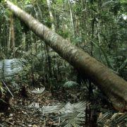 Brasilien meldet Rückgang der Abholzung im Amazonas-Regenwald (Foto)