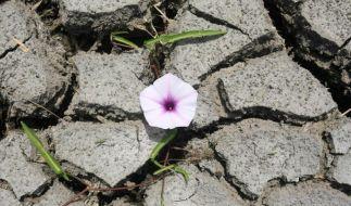 Report: Dürren, Hitze und Flutkatastrophen immer verheerender (Foto)