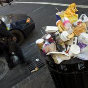 Insekten befreien New Yorks Straßen von Abfall (Foto)