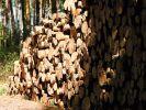 Ob als Scheitholz oder Pellets: Der nachwachsende Rohstoff Holz für die Heizung ist in Deutschland in großen Mengen verfügbar. (Foto)