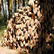 Umweltfreundlich und preiswert durch die kalte Jahreszeit (Foto)