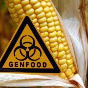 EU findet Grundsatzeinigung für Genpflanzen-Anbau (Foto)