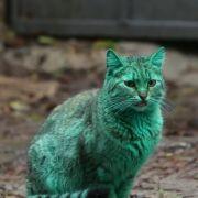Radioaktiv? Diese Katze sorgt für Aufschrei! (Foto)