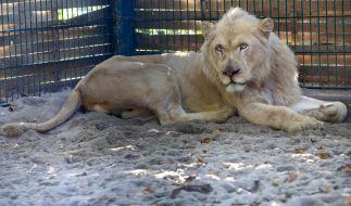 Die Motive des Zoobesuchers sind weiterhin unklar. (Foto)