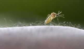 Kampf gegen Malaria: Viel weniger Todesfälle (Foto)