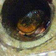 Baby wird Toilette herunter gespült - und überlebt! (Foto)