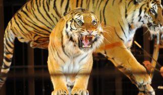 Niederlande verbieten Wildtiere im Zirkus (Foto)