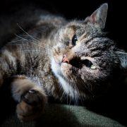 Katze überlebt 36 Tage in Umzugskarton (Foto)