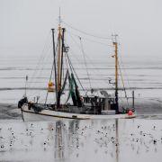 Umweltorganisationen unzufrieden mit EU-Fischfangmengen für 2015 (Foto)