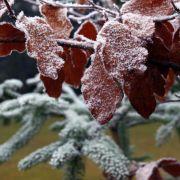 Tief «Engel» bringt Schmuddelwetter statt weiße Weihnacht (Foto)