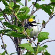 Eingebautes Frühwarnsystem: Vögel spüren Stürme Tage vorher (Foto)
