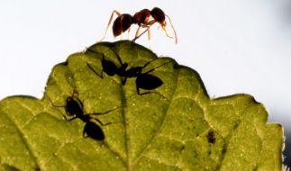 Weil ein Baby im Mülleimer entsorgt wurde, nagten Ameisen es lebendig an. (Foto)