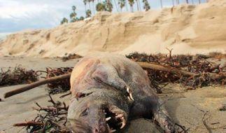 US-Reporter John Palminteri fand dieses Geschöpf und postete ein Bild des vermeintlichen See-Ungeheuers. (Foto)