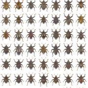 Schwierige Namensfindung: Forscher erfassen 98 neue Käferarten (Foto)