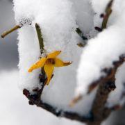 Teils kräftige Schneefälle im Westen und Süden (Foto)