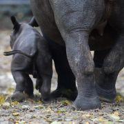 Artenschutz-Bilanz des WWF fällt durchwachsen aus (Foto)