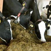 Erneut Bio-Futter mit Pflanzenschutzmitteln belastet (Foto)