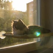 Sanfter Katzenschlummer mit Panoramablick (Foto)