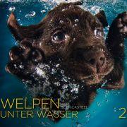 Welpen unter Wasser ist ein zauberhafter Kalender mit süßen Hundewelpen im kühlen Nass.