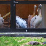 Vogelgrippe im Rostocker Zoo:Weitere 18 Vögel getötet (Foto)