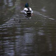 43 Nachweise von Vogelgrippe in Rostocks Zoo (Foto)