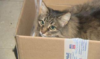 Diese Katze ist ein Lebensretter! (Foto)
