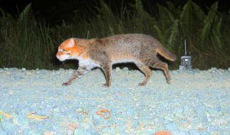 Forscher: Arten auf Borneo müssen gezielt geschützt werden (Foto)