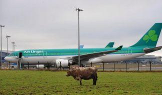 Bericht: Aer Lingus und British-Airways-Mutter kurz vor der Einigung (Foto)