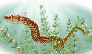 Forscher entdecken die bisher ältesten Schlangen-Fossilien (Foto)