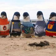 Sie erraten nie, warum diese Pinguine kleine Pullover tragen! (Foto)