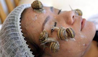 Thailändische Forscher schwören auf Schneckenschleim (Foto)