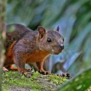 Wissenschaftler: Nach Todesfällen Bunthörnchen untersuchen (Foto)