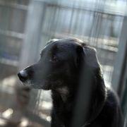 Mann begeht nach Zwangs-Tötung seines Hundes Suizid (Foto)