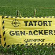 Genpflanzen-Verbot soll auf Länderebene umgesetzt werden (Foto)