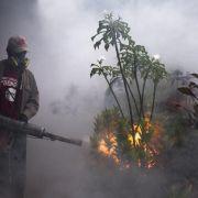Bolivien löst Alarm wegen Chikungunya-Virus aus (Foto)