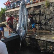 Ach, du dicker Fisch! Junge angelt 480-Kilo-Koloss (Foto)