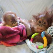 Zu süß! Das ist Affenliebe auf den ersten Blick! (Foto)