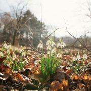 Sturm und Neuschnee - aber der Frühling kommt bestimmt (Foto)
