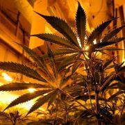 Grüne legen Gesetzentwurf für Cannabis-Legalisierung vor (Foto)