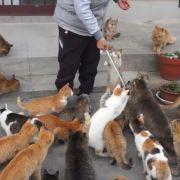 Hunderte Katzen beherrschen Mini-Insel (Foto)
