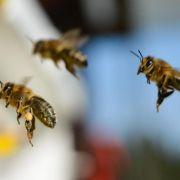 Umweltschützer dürfen Pestizide gefährlich für Bienen nennen (Foto)