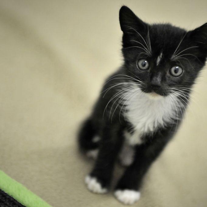 Katzen mit Staubsauger malträtiert und zu Tode gequält (Foto)