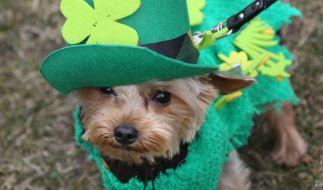 Hund Mixie in grünem Kostüm bei einer Parade zum St. Patrick's Day in Berlin. (Foto)