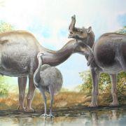 Forscher lösen Rätsel um «seltsamste» ausgestorbene Tiere (Foto)