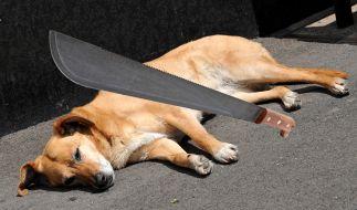Mann greift Hund mit Machete an (Symbolbild). (Foto)